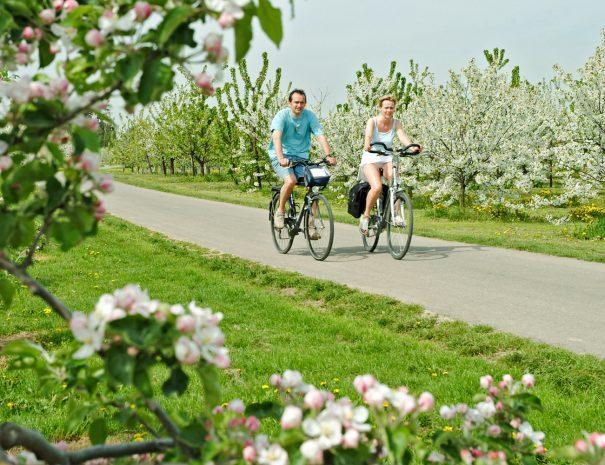 Casa de Paja - fietsen in bloesemparadijs Haspengouw